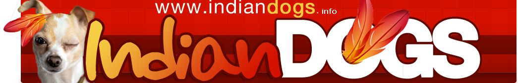 Indiandogs guide web et mobile avec Indian Dogs